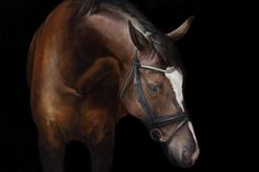 'Finale' oil on canvas by Tony O'Connor Equine Art www.ie Image ref in collaboration with Annie Damhof Photography and Zeelen and Damhof Photography Horse Oil Painting, Horse Paintings, Equine Art, Horse Art, Beautiful Horses, Indian Art, Animal Drawings, Oil On Canvas, Pony