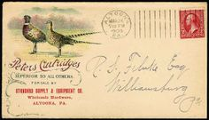 Peters Cartridges. Gorgeous multicolor illustrated design on 1900 cover showing Two Pheasants, franked with 2c Bureau tied by Altoona, Pa. m...