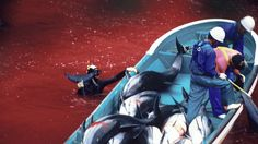 Petition · Stop the Japanese Taiji dolphin slaughter · Change.org