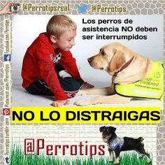 Si ves que un niño o adulto lleva un perro de asistencia  NO debes acariciarlo llamarlo o interrumpir su labor.  #perrotips