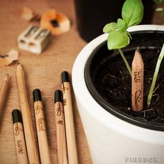 Sprout Pencil With a Seed / Ever tried to grow a pencil? Well, this isn't exactly a pencil tree, but it comes darn close. http://thegadgetflow.com/portfolio/sprout-pencil/