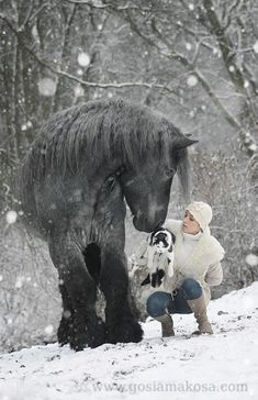 Great big horse in the snow smelling little pug on lady's lap.