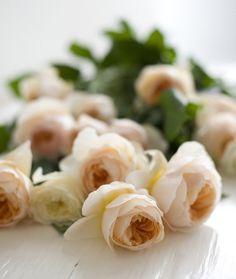rosas color crema.