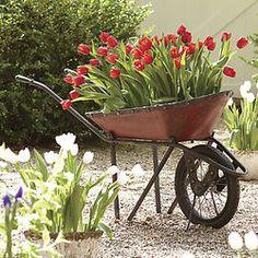 Decorative Garden Wheelbarrow from Through the Country Door® Will do this idea this spring. Garden Tools, Wheelbarrow Garden, Outdoor Gardens, Container Gardening, Garden Decor, Creative Gardening, Garden, Country Gardening, Plants