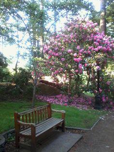 (*) Twitter Outdoor Furniture, Outdoor Decor, Bench, Canada, Victoria, Twitter, Flowers, Home Decor, Gardens