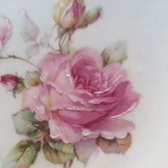 Hand painted rose on porcelain