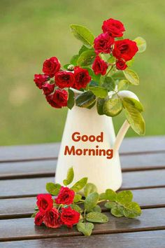 Good Morning Flowers Pictures, Good Morning Beautiful Pictures, Good Morning Picture, Good Night Image, Morning Pictures, Good Morning Friends Quotes, Happy Sunday Quotes, Good Morning Cards, Good Morning Greetings