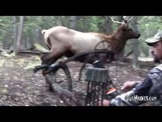 A Magical Morning in the Elk Woods - Bowhunting for Elk Hunting Video