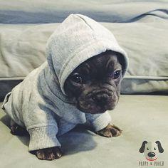 I'm a person too - @puppyandpooch #dogsofinstagram #doglove #puppies #puppy #puppylove