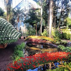 japanese garden in #nybg