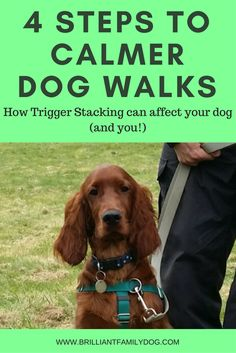 Trigger Stacking can make a lot of difference to how your dog perceives the world. Read the post to learn how you can change this simply and kindly.