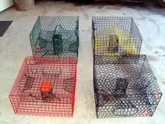 kajun crab traps Blue Crab Trap, Blue Crabs, Lobster Trap, Crab And Lobster, Kayak Fishing, Fishing Tips, West Coast Fishing, Crawfish Traps, Side Bar