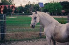 Dream Stables, Photo Reference, Pony, Horses, Life, Animals, Pony Horse, Animales, Animaux