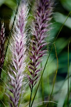 grasses, I love to watch them moving in the wind. So peaceful.