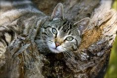 """How to raise and manage """"Barn Cats""""."""