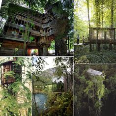 Green Ideas - Tree Houses