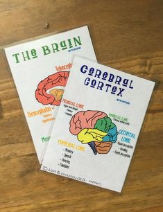 19 Best Anatomy Flashcards images in 2019