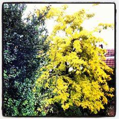 Yellow, private garden