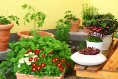 Container GardensContainers and pots are your new best friends if you're planning a balcony or terrace garden. Talk to your nursery about the size and conditions of your outside area so they can help you choose suitable plants and containers.