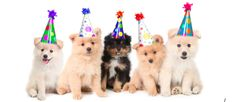 http://www.wsj.com/articles/for-a-better-party-rent-puppies-1437495377: The latest trend says that puppies make for a better party. Would you want to rent a puppy for your upcoming party?   #BizBash #Biz #Bash #Puppies #Dogs #Birthday #Bachelor #Bachelorette #Party #Event #Special #Fun #Namevents #‎EventPlanning ‪#‎EventMeetings ‪#‎EventDesign ‪#‎EventCoordination ‪#‎EventProducers