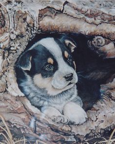 Cattle Dog Pup in Log