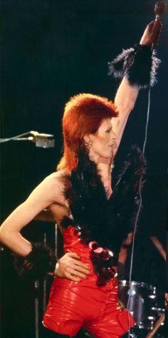 David Bowie                                                       …