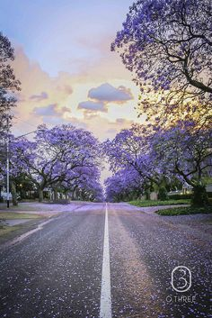 Street of purple Jacaranda trees, rows and rows of them in sunny South Africa Landscape Drawings, Cool Landscapes, Beautiful World, Beautiful Images, Tree Tattoo Back, Out Of Africa, Pretoria, Beautiful Sunrise, Pretty Pictures