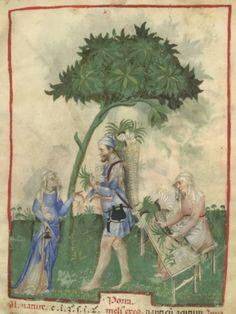 Marchand et marchande de poireaux. Ibn Butlân, Tacuinum sanitatis, Milan, vers 1390, BNF, nouvelle acquisition latine 1673, fol. 24