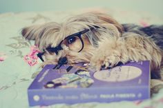 book, beautiful, and dog image