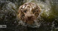 Whirlpool by Fahmi Bhs on 500px