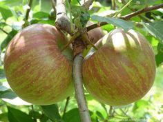 Mele - Apples