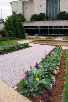 A view toward to east side of the National Museum of American History building from the new Victory Garden.
