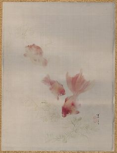 Gold-fishes  Watanabe Seitei  (Japanese, 1851–1918)  Period: Meiji period (1868–1912) Culture: Japan Medium: Album leaf; ink and color on silk Dimensions: 13 7/8 x 10 1/2 in. (35.2 x 26.7 cm) Classification: Painting