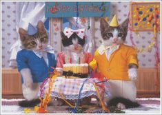 Happy b-day cats Happy Birthday Pictures, Happy Birthday Wishes, Cute Cats And Kittens, Cool Cats, Kitty Cats, Funny Animals, Cute Animals, Cat Birthday, Birthday Animals