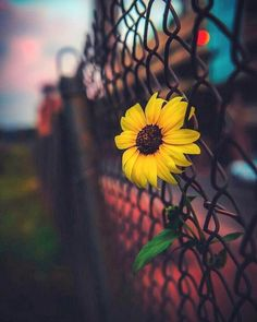 Find images and videos about nature, flowers and sunflower on We Heart It - the app to get lost in what you love. Tumblr Backgrounds, Cute Wallpaper Backgrounds, Pretty Wallpapers, Aesthetic Iphone Wallpaper, Aesthetic Wallpapers, Wallpaper Nature Flowers, Flower Phone Wallpaper, Sunflower Wallpaper, Sunflowers Tumblr