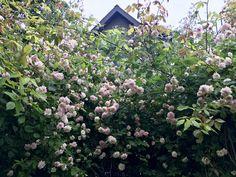 Ikebana, Leaves, Flowers, Plants, Plant, Royal Icing Flowers, Flower, Florals, Flower Arrangements