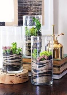 Sand Art Terrariums ~ pretty cool looking.a diy craft kit makes it happen decor diy projects HWTF x Makers Kit DIY Sand Art Terrarium - Honestly WTF Air Plants, Indoor Plants, Succulents Garden, Planting Flowers, Potted Garden, Glass Garden, Balcony Garden, Sand Art Crafts, Diy Crafts