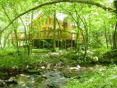 Log Cabin in Nature