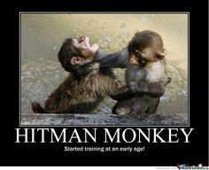 10 Best Hitman Monkey Images Hitman Monkey Monkeys Funny