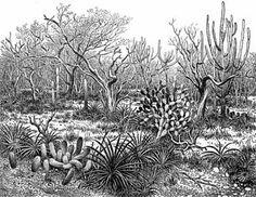 O Nordeste.com – Enciclopédia Nordeste - Caatinga