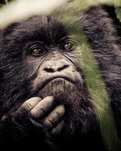 """137 Likes, 4 Comments - Gabi Guiard Photography (@gabi_guiard) on Instagram: """"I will never forget the first time that I saw this fantastics animals! african_portraits…"""""""