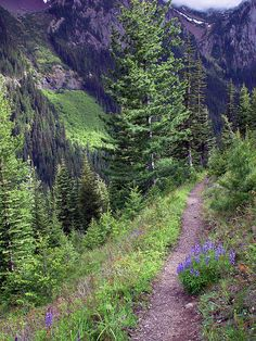 High Country Trail | Olympic Mtns by bittermonkMT, via Flickr