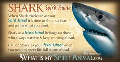 In-depth Shark Symbolism & Shark Meanings! Shark as a Spirit, Totem, & Power Animal. Plus, Shark in Celtic & Native American Symbols & Shark Dreams!