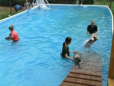 dogs playing around the pool