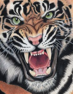 "Tiger Angry Sumatran Snarling Wild Cat Jungle 8.5""x11"" Colored Pencil Drawing Painting Sherry Goeben Art. This is an original 8-5/8"" x 10-7/8"" colored pencil painting done with Faber-Castell Polychromos & Prismacolor Premier Colored Pencils, pigment and gel pen on Stonehenge Vellum fine art paper. I don't think you would want to meet up with this fellow on a dark and lonely night! He's angry and very menacing! This will ship in a clear plastic sleeve between cardboard for protection. I…"