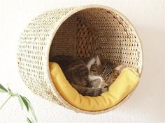 Cute idea for my cat lover friends. Cat bed made out of an Ikea basket. Diy Cat Bed, Cat House Diy, Tiny House, Diy Bed, Diy Cat Hammock, Diy Hanging Shelves, Diy Cat Shelves, Cat Room, Pet Furniture