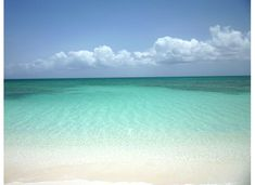 Turks and Caicos The water is clear Bryan could see the sharks coming