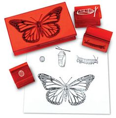 "4 high quality rubber stamps are mounted on plastic and come in a convenient storage case. Stamps measure from 1"" x 1"" to 5"" x 3"".     Butterfly Life Cycle Stamp Set Includes:        Butterfly Egg Rubber Stamp      Caterpillar Rubber Stamp      Chrysalis Rubber Stamp      Adult Butterfly Rubber Stamp    A crafty way to learn more about the life cycle of the butterfly!"