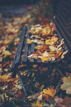 When the leaves turn from green to golden brown, and start to tumble down you know it's autumn now. ~Lily Autumn my favourite season