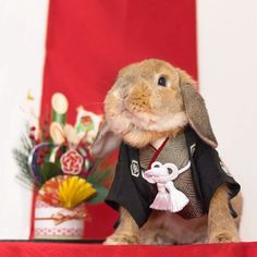 Meet PuiPui, The World's Most Stylish Bunny - Album on Imgur